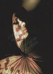 Large limited edition prints, by John Neville Cohen, Madam Butterfly, Butterfly wing, Profile portrait,