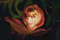 'Flower Maiden' Large limited edition prints by John Neville Cohen